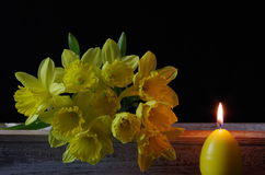 Jonquil. A jonquil with candle in close up stock images