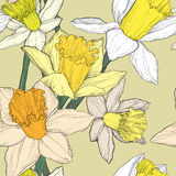 Jonquil daffodil narcissus seamless pattern Stock Photography