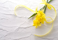 Jonquil flower. And ribbon on white wall stock photography