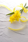 Jonquil flower. And ribbon on white wall royalty free stock photography