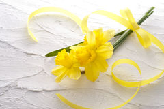 Jonquil flower. And ribbon on white wall Royalty Free Stock Photos