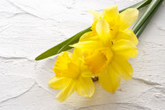 Jonquil flower. On white wall Royalty Free Stock Images