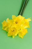 Jonquil flowers. Yellow jonquil flowers on green painted background stock photos