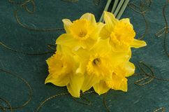 Jonquil flowers. Yellow jonquil flowers on green background stock photography