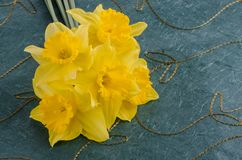 Jonquil flowers. Yellow jonquil flowers on green background royalty free stock image