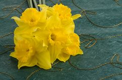 Jonquil flowers stock image