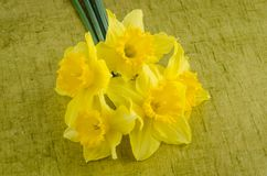 Jonquil flowers stock images