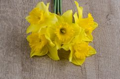 Jonquil flowers. Yellow jonquil flowers on wooden background royalty free stock photo