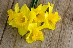 Jonquil flowers. Yellow jonquil flowers on wooden background royalty free stock photography