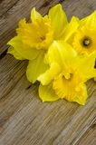 Jonquil flowers. Yellow jonquil flowers on wooden background stock photography
