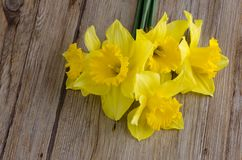 Jonquil flowers. Yellow jonquil flowers on wooden background stock images