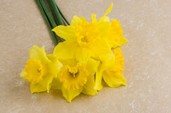 Jonquil flowers. Yellow jonquil flowers on paper background royalty free stock images