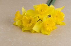 Jonquil flowers. Yellow jonquil flowers on paper background stock photography