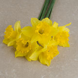 Jonquil flowers. Yellow jonquil flowers on paper background royalty free stock photos