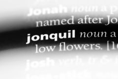 Jonquil. Word in a dictionary.  concept stock photo