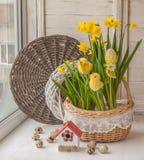 Jonquille-autocollants, poulets et oeufs de jaune de fenêtre de décoration de Pâques photos libres de droits