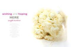 Jonquille d'Erlicheer ou fleurs de jonquille colorée par blanc Image stock