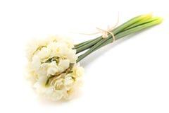 Jonquille d'Erlicheer ou fleurs de jonquille colorée par blanc Photographie stock libre de droits