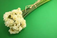 Jonquille d'Erlicheer ou fleurs de jonquille colorée par blanc Photographie stock
