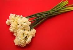 Jonquille d'Erlicheer ou fleurs de jonquille colorée par blanc Photo libre de droits