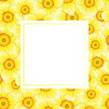 Jonquille jaune - Narcissus Banner Card Border sur le fond blanc Illustration de vecteur Illustration Stock