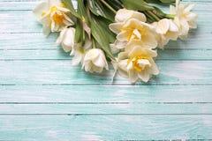 Jonquilles et fleurs blanches de tulipes sur les planches en bois de turquoise Photo stock