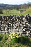 Jonquilles et mur de pierres sèches Photos libres de droits
