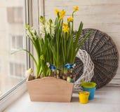 Jonquilles jaunes et jacinthes blanches dans les boîtes de balcon Photo libre de droits