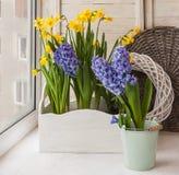 Jonquilles jaunes et jacinthes bleues dans des boîtes de balcon Images libres de droits