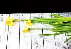 Jonquilles jaunes sur les conseils blancs Photographie stock libre de droits