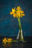 Jonquilles miniatures jaunes Image stock