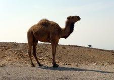 jordão Fotos de Stock Royalty Free