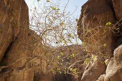 jordão petra Imagens de Stock