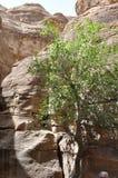 jordão Rochas A estrada à cidade antiga Petre Fotos de Stock Royalty Free