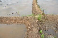 Jord- fördämning i fält Royaltyfria Foton