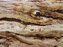 Jord f?rgade den abstrakta texturerade sk?llmodellen arkivbilder