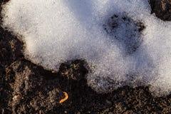 Jord från under snön Arkivfoton