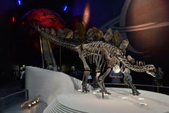 Jord Hall Stegosaurus Natural History Museum London Arkivbild