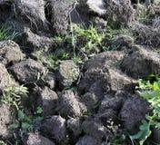 Jord kultiverad smuts, jord, jordning, grå färg landar bakgrund Arkivbild