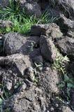 Jord kultiverad smuts, jord, jordning, grå färg landar bakgrund Royaltyfri Foto