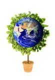 jorda en kontakt ecoplanetväxten Royaltyfria Bilder