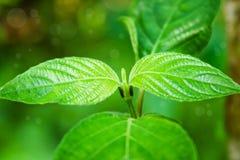 jorda en kontakt green Royaltyfria Foton