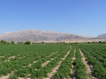 Jordan. Agriculture. Royalty Free Stock Images