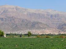Jordan. Agriculture. Stock Photos