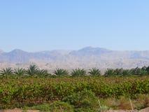 Jordan. Agriculture. Stock Images