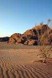 Jordan desert. A lonely tree in the desert of Jordan. photo taken in 2006 royalty free stock photos