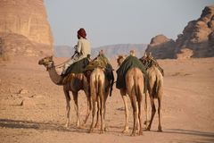 Jordan Desert Camel Wadi Rum. A man with his four camels in the famous desert Wadi Rum in Jordan Royalty Free Stock Photography