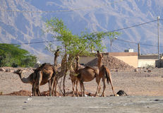 Jordan. Desert. Royalty Free Stock Images