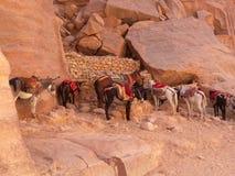 Jordan - desert road to Petra. Jordan, Road to Petra, travelling by donkey Stock Photography