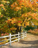 Jordan Path. This is a digital photo taken in October of a brilliant maple tree in its autumn splendor, an old fence and well trodden path, all in my native Royalty Free Stock Photos